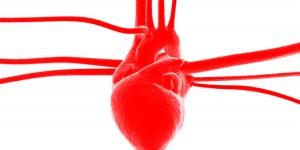 Four Properties of Cardiac Cells