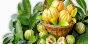 Garcinia Cambogia, a blessing or a disguised side affect rich fruit